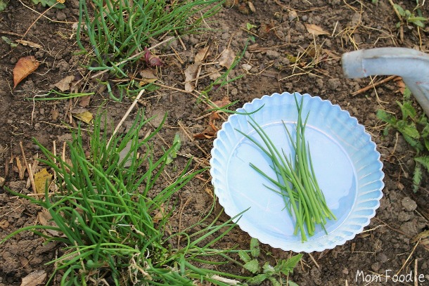 picking chives for compound butter
