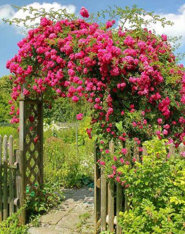 Rose trellis arch