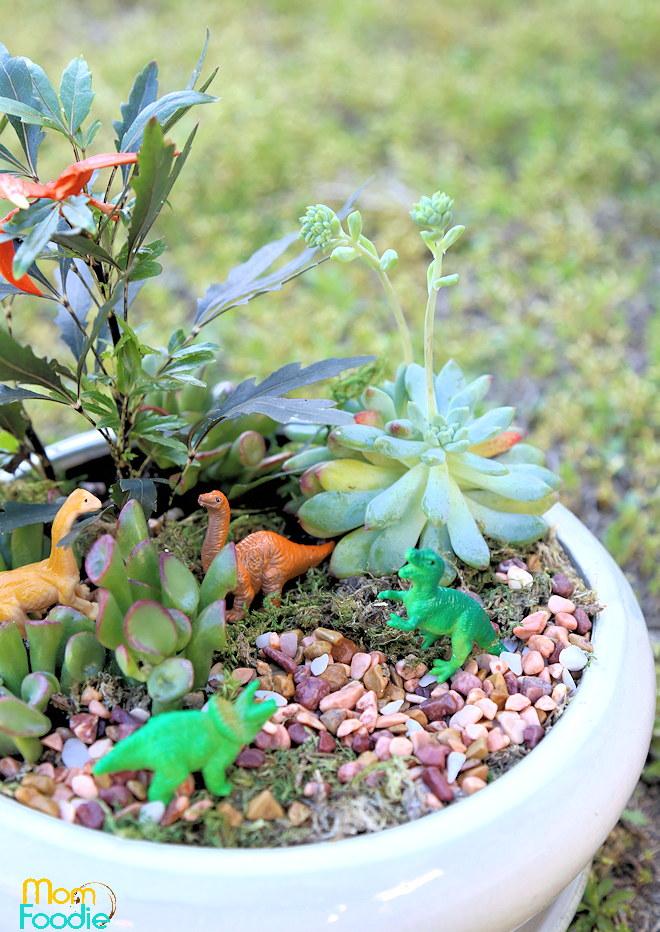 Dino planted garden