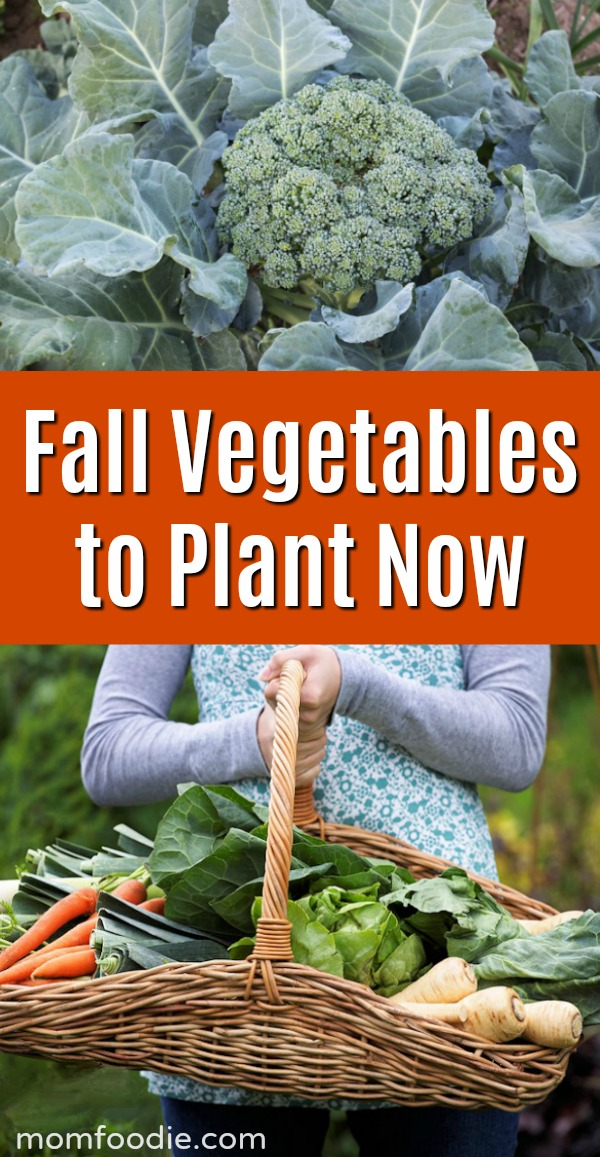 Fall Vegetables to Plant Now