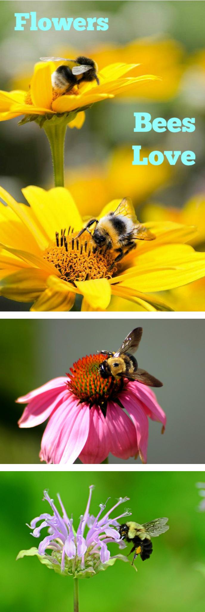 Flowers Bees Love