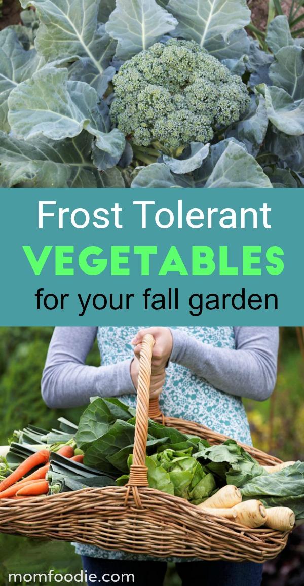 Frost Tolerant Vegetables for your Fall Garden