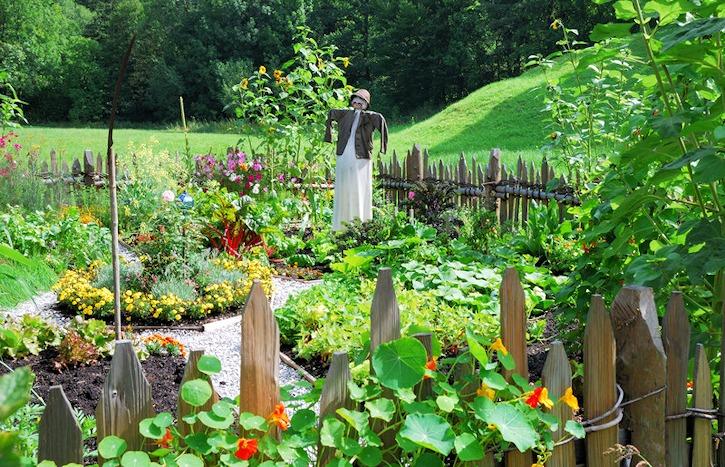 Growing Vegetables in a Flower Garden