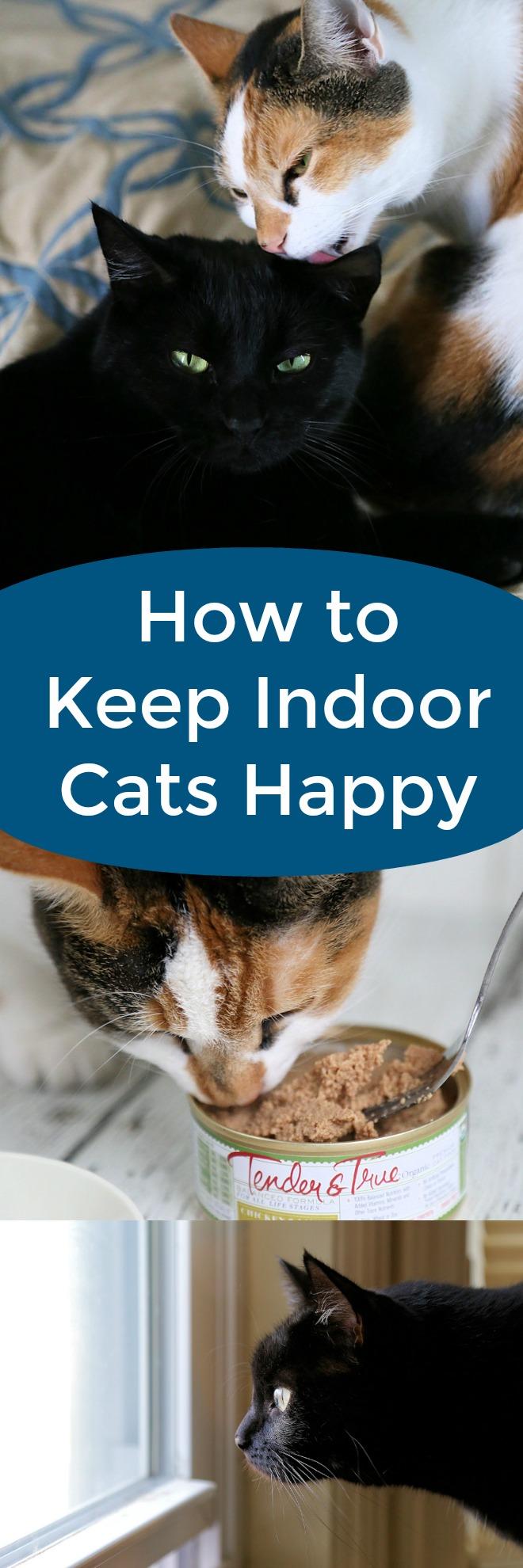 How to Keep Indoor Cats Happy #ad #TenderandTruePet #cats #cat #pets #feline
