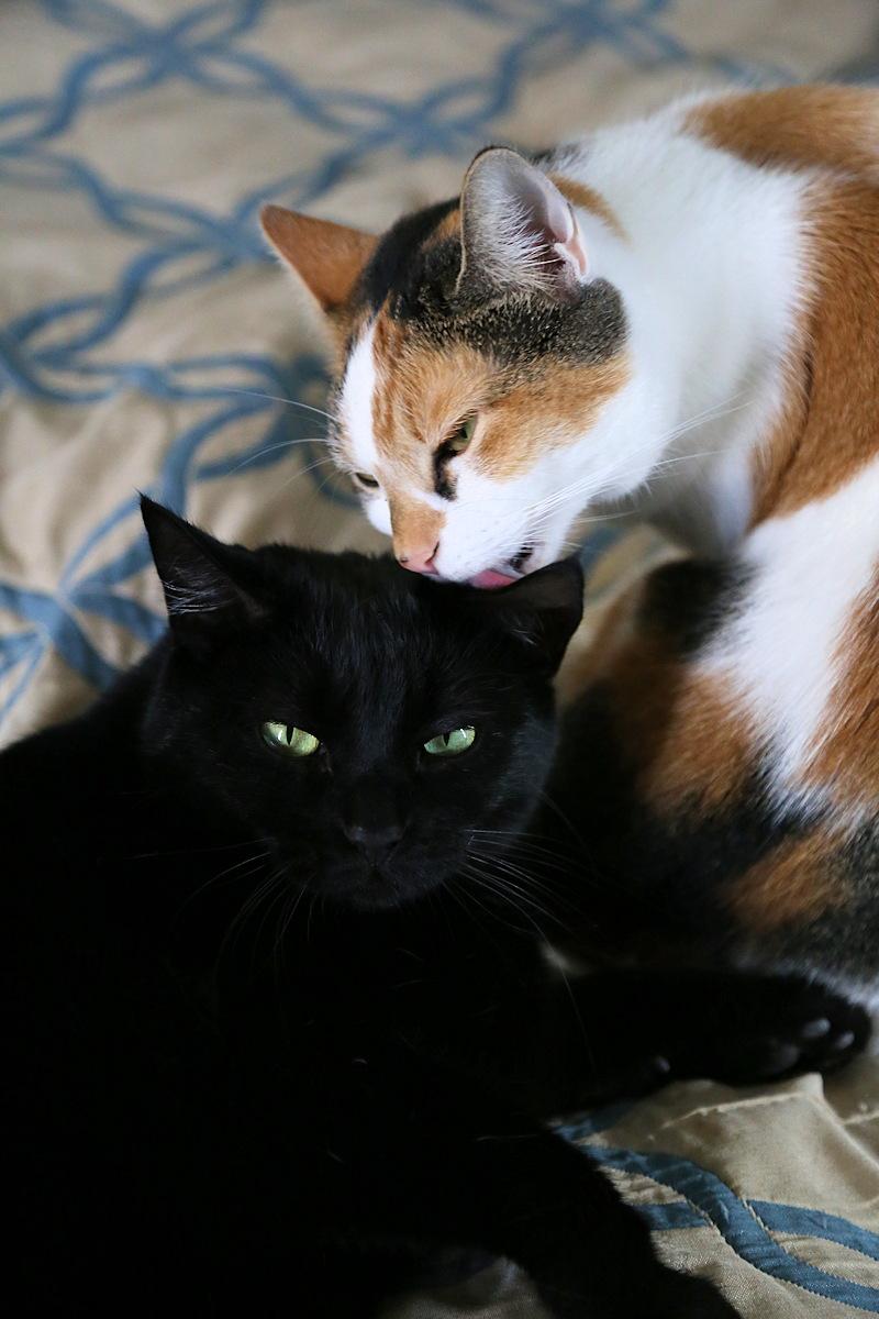 Indoor cat companionship
