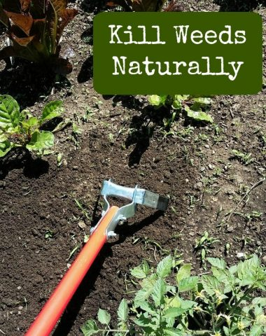 Kill Weeds Naturally