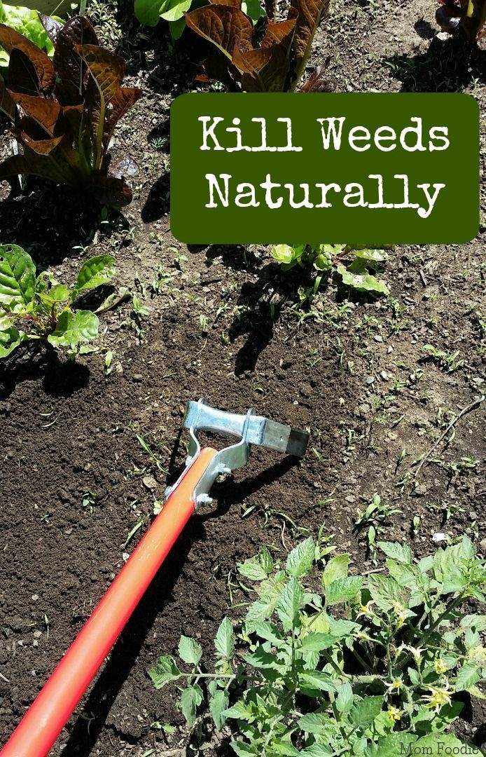 Natural Way To Kill Weeds Without Killing Plants