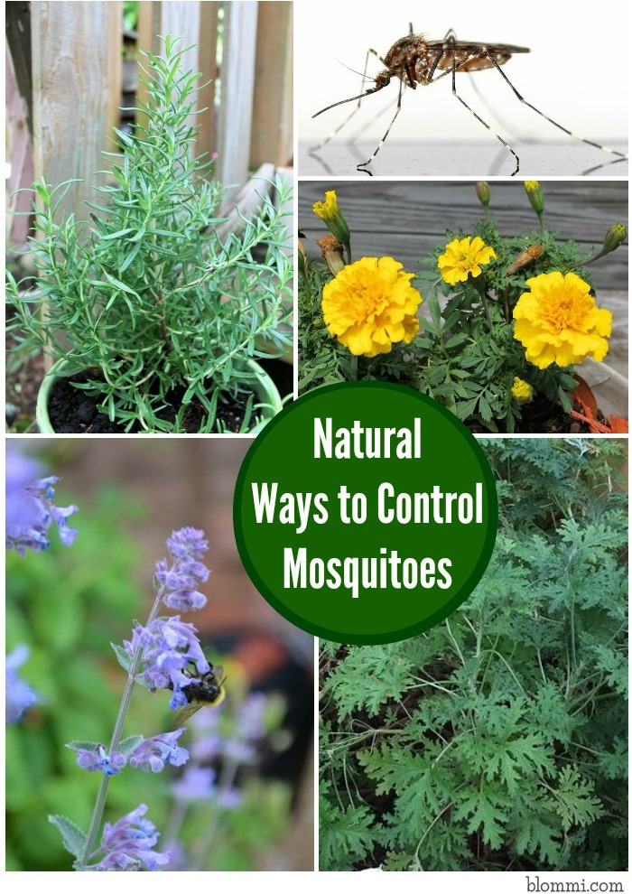 Wonderful Natural Ways To Control Mosquitoes In Your Yard