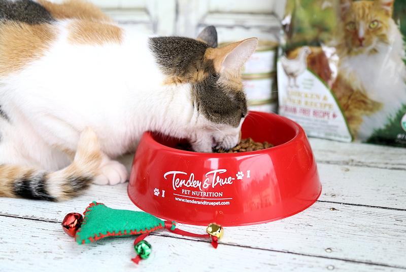 Organic dry cat food