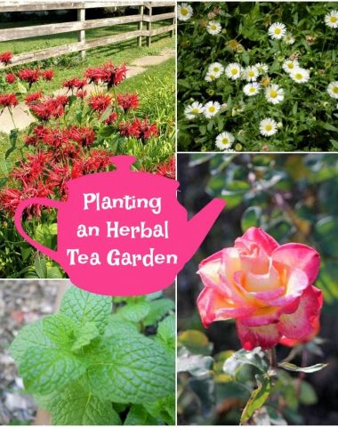 Planting an Herbal Tea Garden