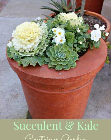 Succulent & Kale Container Garden