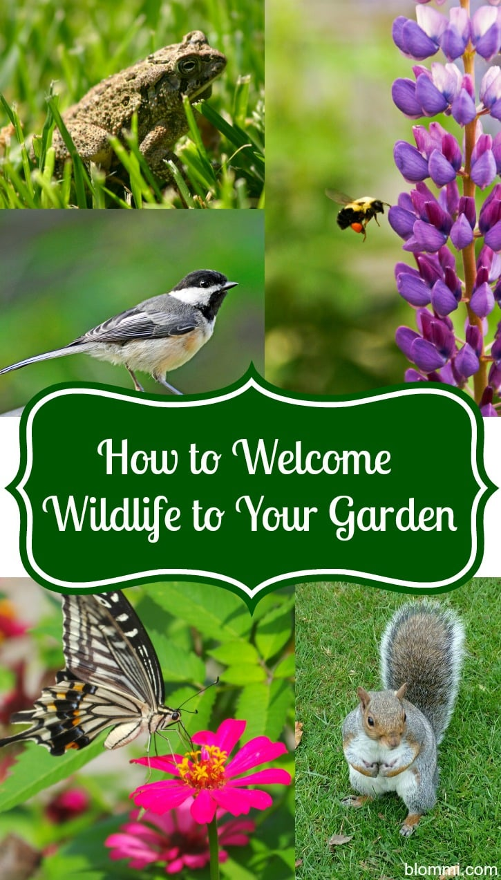 Welcome Wildlife to the Garden