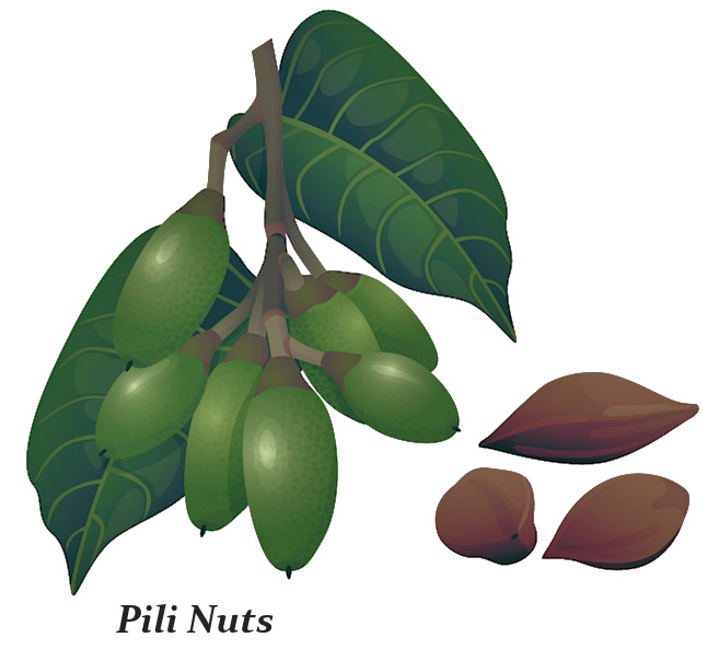 What are Pili Nuts
