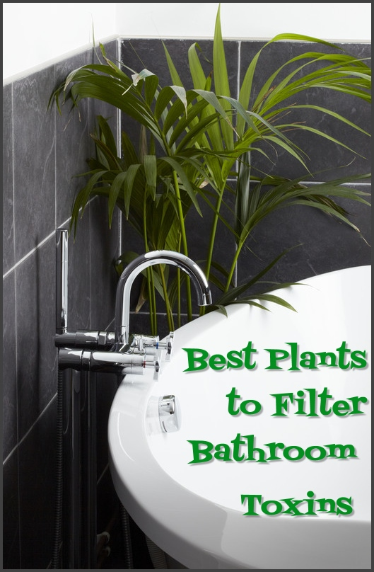 best air purifying bathroom plants