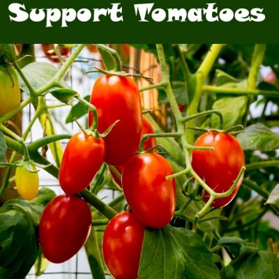 Best Ways to Support Tomatoes