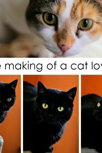 The Making of a Cat Lover