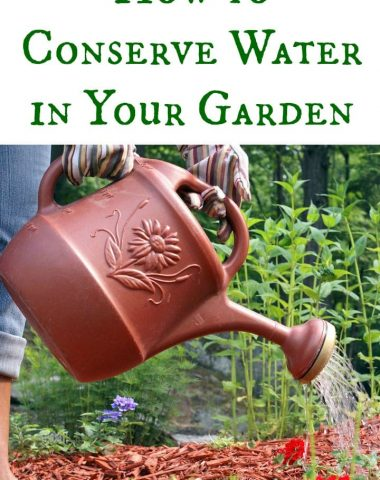 How to Conserve Water in the Garden