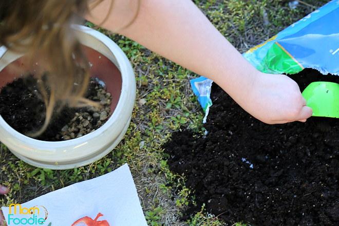dirt for dinosaur planter