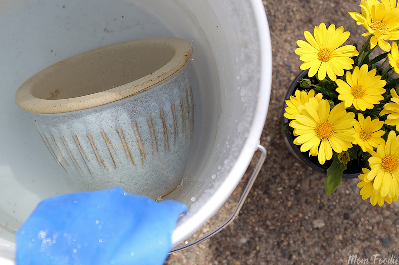 disinfecting planters with bleach