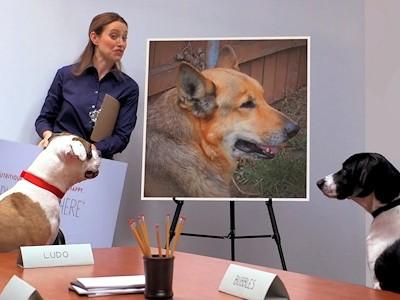 """Look! My Dog's a """"SupaStar"""" #HappyStartsHere #ALPO"""