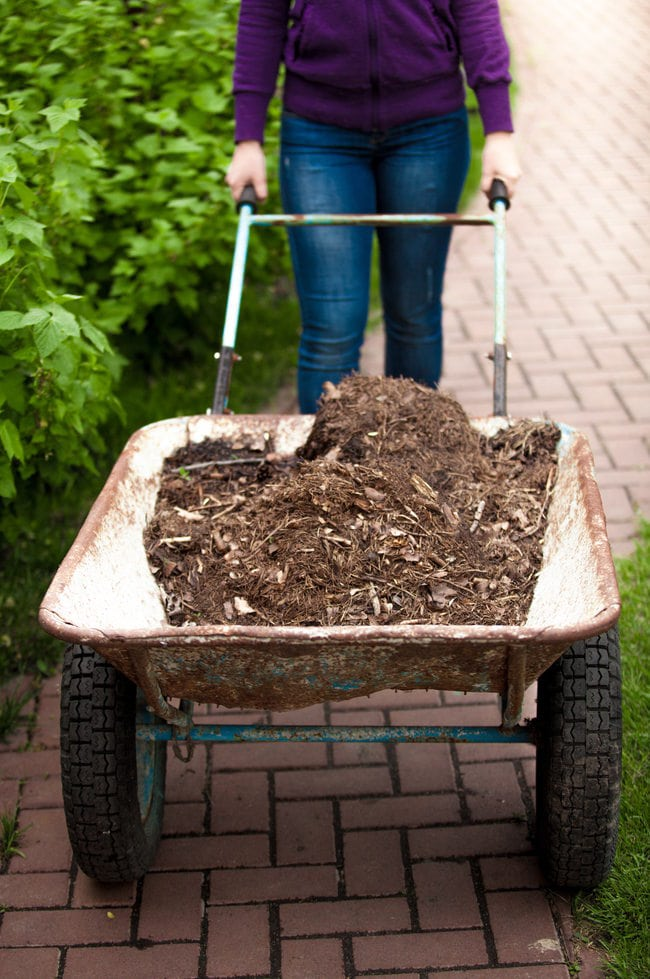 fall vegetable garden soil preparation