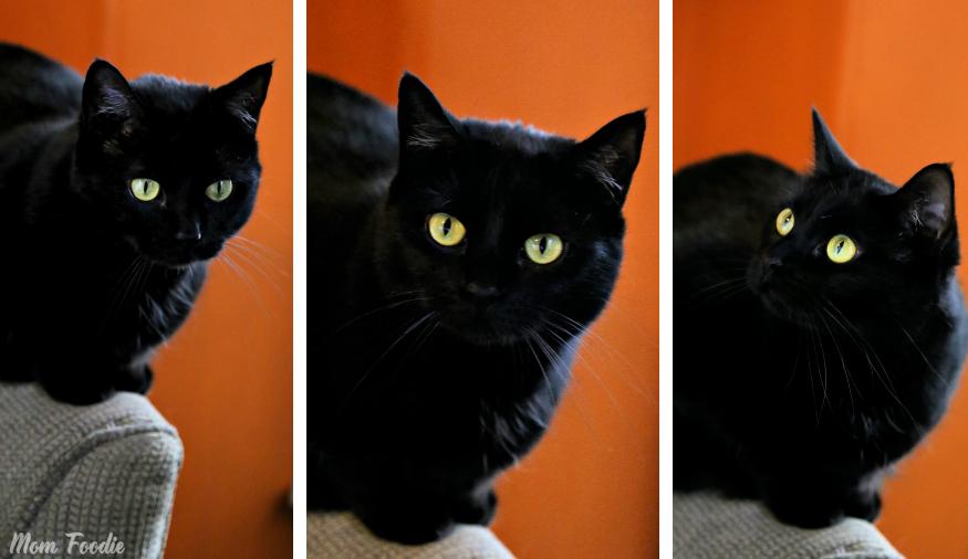 feline ambassador