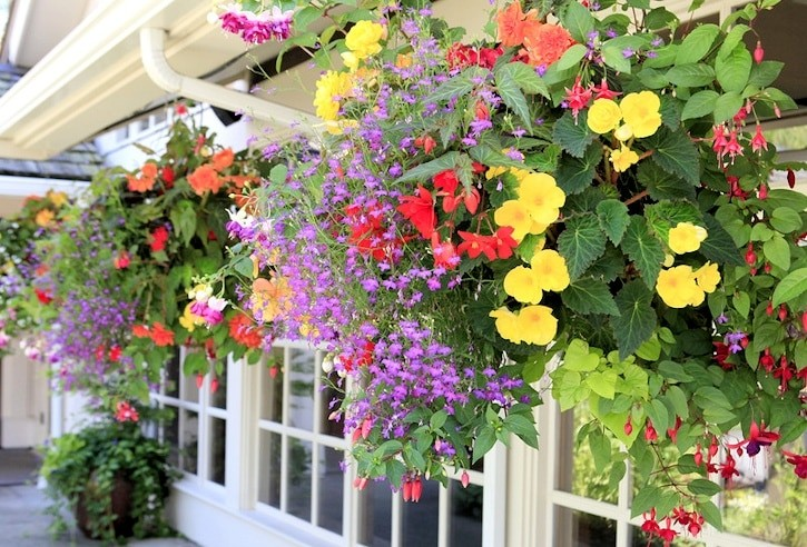 flower baskets