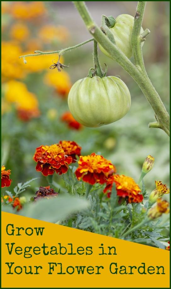 Grow vegetables in a flower garden