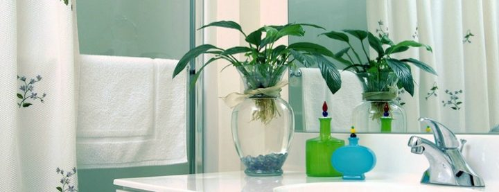 houseplants-in-bathroom