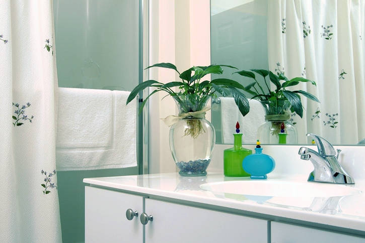 best plants for bathroom toxins