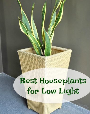 houseplants for low light