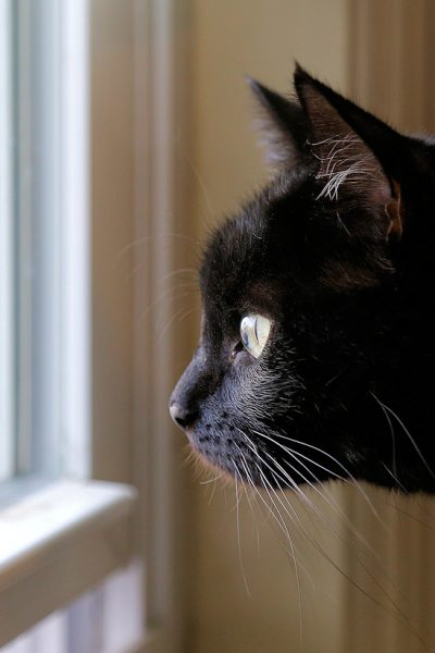 keep indoor cats happy