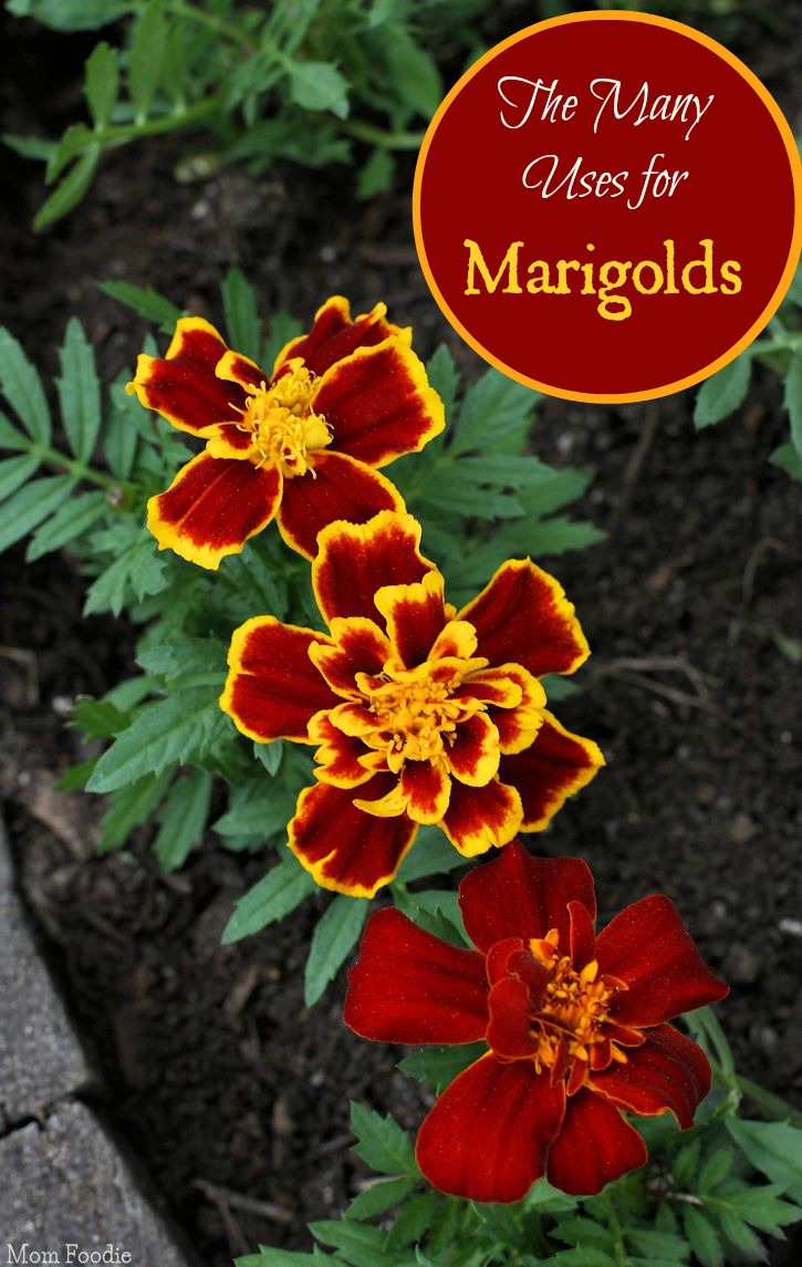 Uses Of Kitchen Garden Uses For Marigolds Garden To Kitchen To Crafting And More