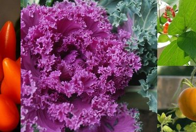 Ornamental Vegetables to Add to Your Garden