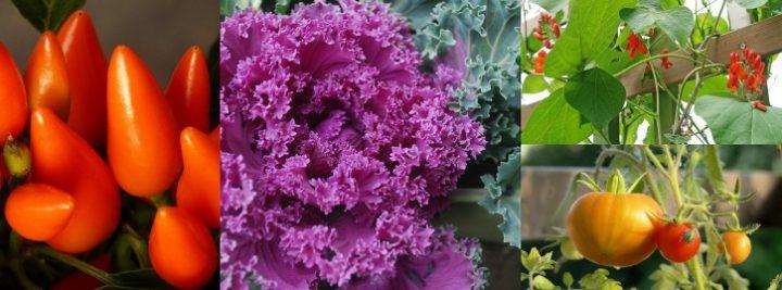ornamental vegetables collage