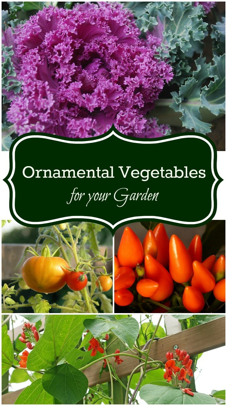 ornamental vegetables