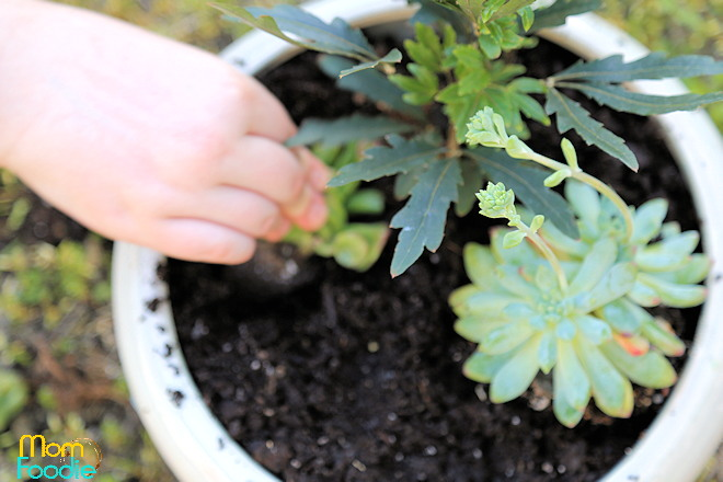 planting dinosaur garden