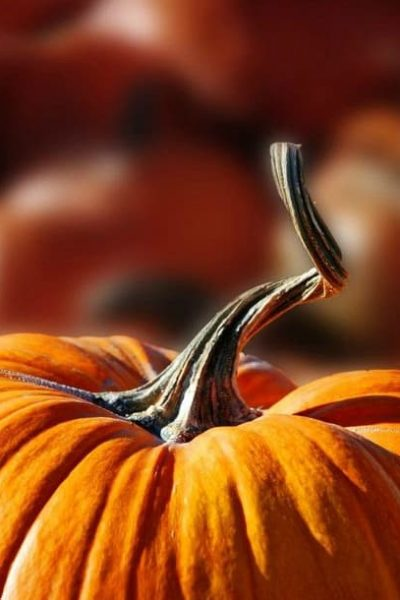 Tips for Growing Your Own Pumpkins