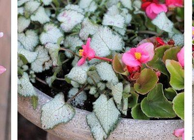DIY Container Flower Garden for Shade