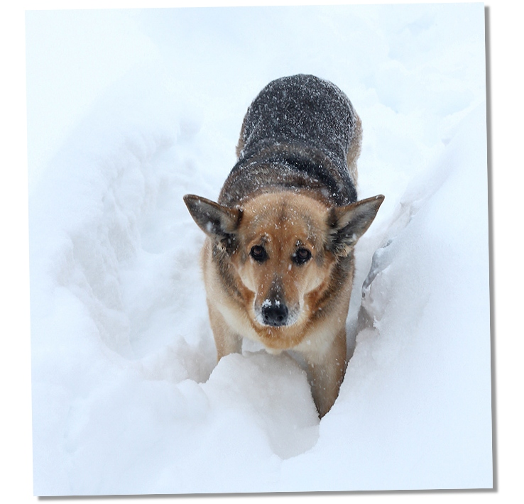 snowbound dog